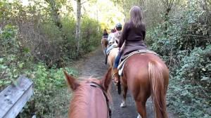 horseback 2